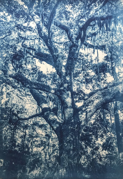 Thomas Hager, 'Hawthorne Live Oak, 2/12', 2015