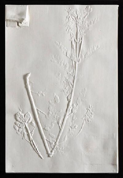 Beth Lipman, 'Wild Madder Specimen Sheet (Astralagus Neglectus)', 2019