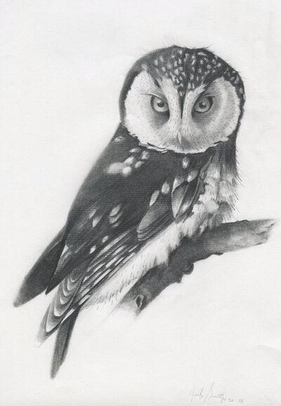 Herb Smith, 'Boreal Owl'