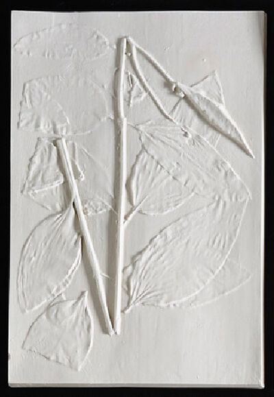 Beth Lipman, 'Wild Madder Specimen Sheet (Asclepias Purpurascens)', 2019