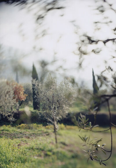 Joann Verburg, 'Campello Olive Trees for Giulio', 2003