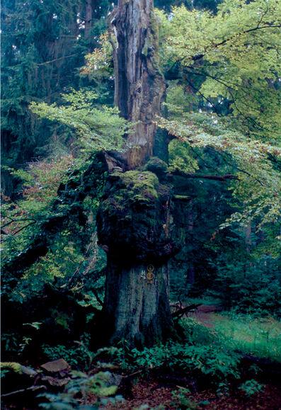 Ralf Schmerberg, 'Tree of Knowledge', 2005
