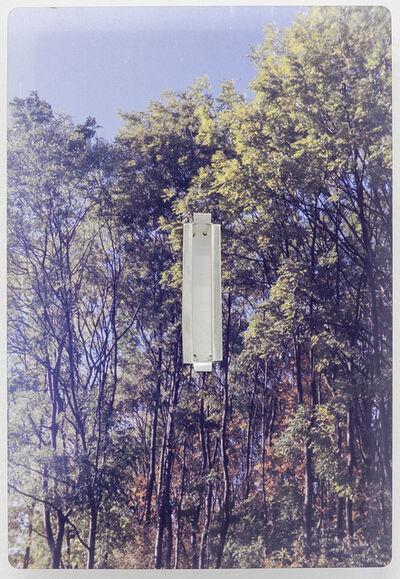 Tessa Lynch, 'Trees behind Asda, bored cavity underneath', 2016