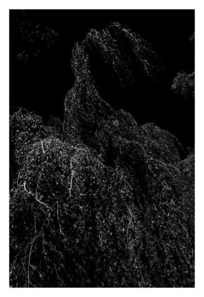 Thomas Maisonnasse, 'Tout ce qui se voit sous le soleil (Jardin des plantes)', 2016