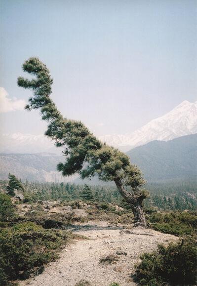 Vincent Delbrouck, 'dino tree ', 2010