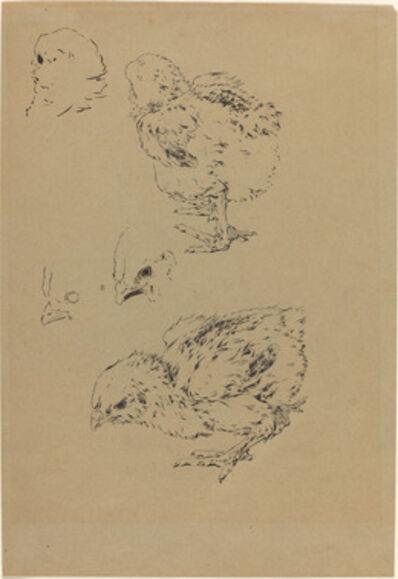 Félix Bracquemond, 'Chicks'