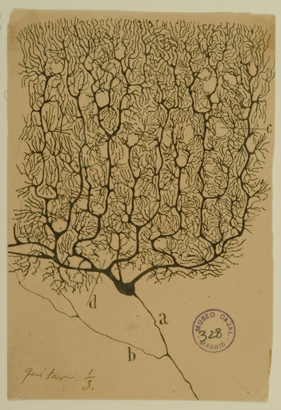 Santiago Ramón y Cajal, 'Purkinje Cell of the Human Cerebellum', 1899