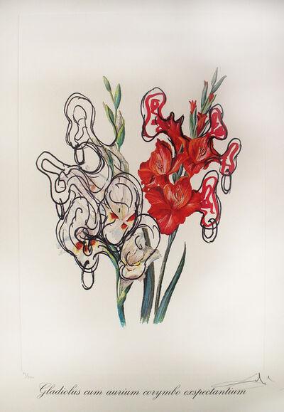 Salvador Dalí, 'Gladiolus Cum Aurium Corymbo Expentantium (Pirate's Gladioli)', 1972