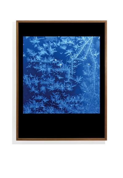 Ti Foster, 'Blue Snowflake', 2019