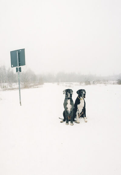 Jitka Hanzlová, 'Untitled (German Dogs)', 2009