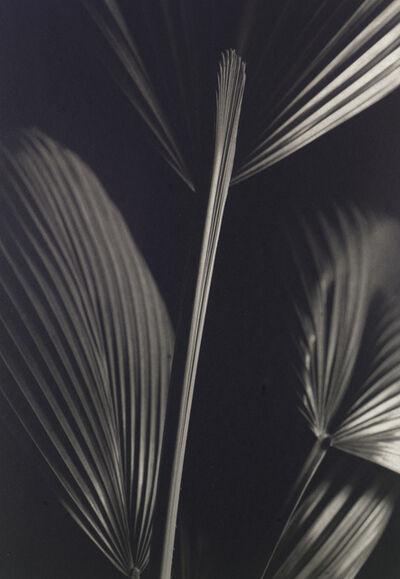 Kenro Izu, 'Still Life #732', 1998
