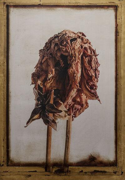 Kris Cox, 'Dahlia Icon 6243', 2017
