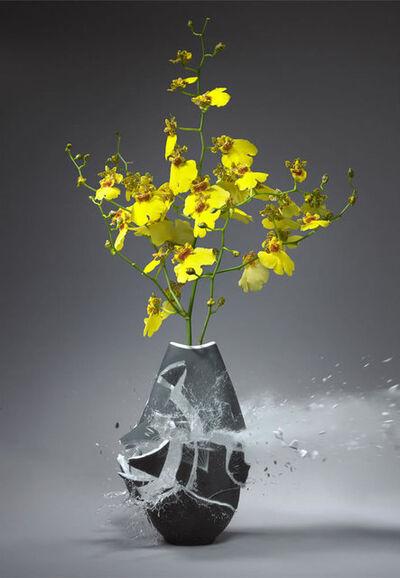Martin Klimas, 'Orchidaceae VII', 2010