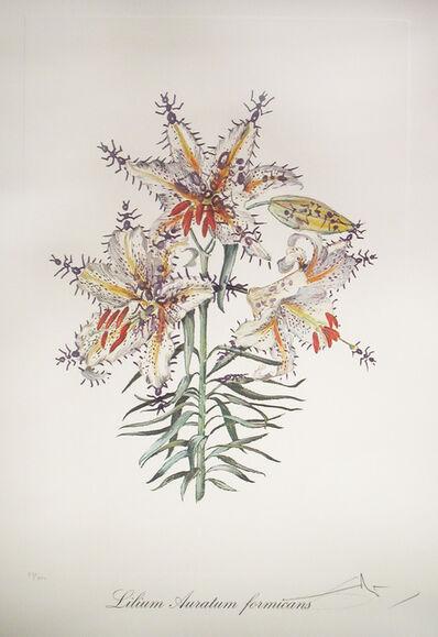 Salvador Dalí, 'Lilium Auratum Formicans (Erotic Lily)', 1972
