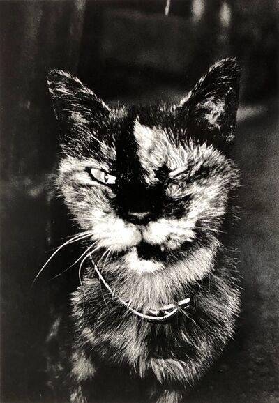 Daido Moriyama, 'Cat'