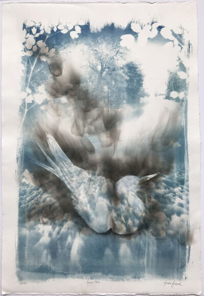 Naomi Friend, 'Smoke and Chaff: Least Tern', 2019