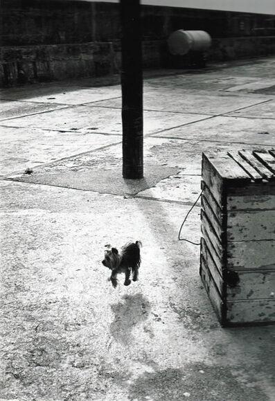 Elliott Erwitt, 'Bollycotton, Ireland', 1968