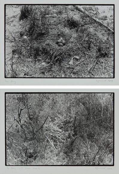 Zoe Leonard, 'Two works: (i) Nest no. 1; (ii) Nest', (i-ii) 1997