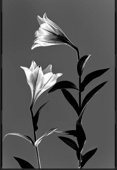Arman, 'N°1, Light Flowers series (Ed. 1/3 + 1 AP )', 2016
