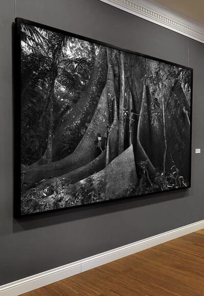 Araquém Alcântara, 'Children and the Sumauma II, Barcelos, Amazon Forest, Brazil', 2012