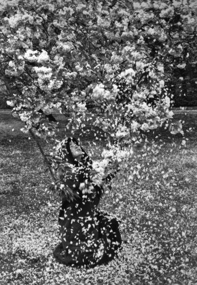 Edouard Boubat, 'Pluie de fleurs', 1989