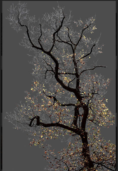 Arman, 'N°17, Dark Trees series (Ed. 2/4 + 1 AP)', 2016
