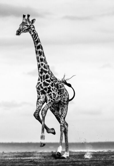 David Yarrow, 'Hoof It ', ca. 2014