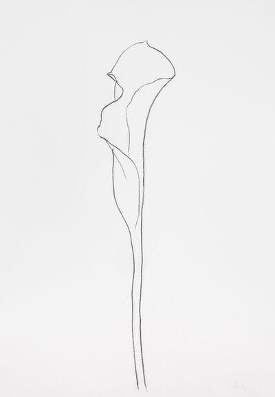 Ellsworth Kelly, 'Calla Lily III', 1983-1985