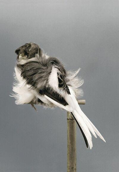 Carsten Höller, 'Birds (9)', 2006