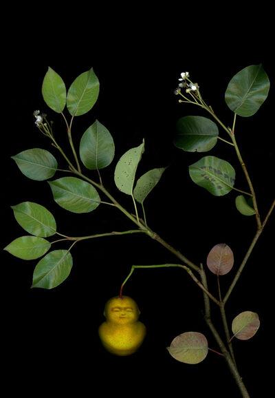 Joyce Rivas, 'Buddha Pear', 2018