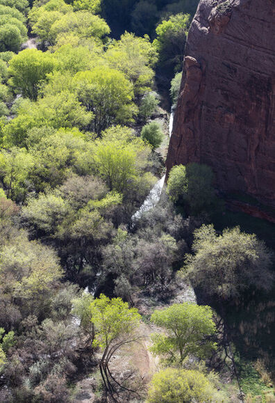 Larry Garmezy, 'Spring in Canyon de Chelly #2 - Trees, spring foliage, greens with red rock cliff, Arizona, Colorado Plateau', 2019