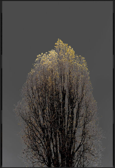 Arman, 'N°22, Dark Trees series (Ed. 2/4 + 1 AP)', 2018