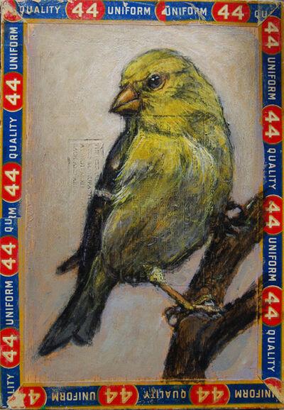 Ed Musante, 'Goldfinch / 44', 2011