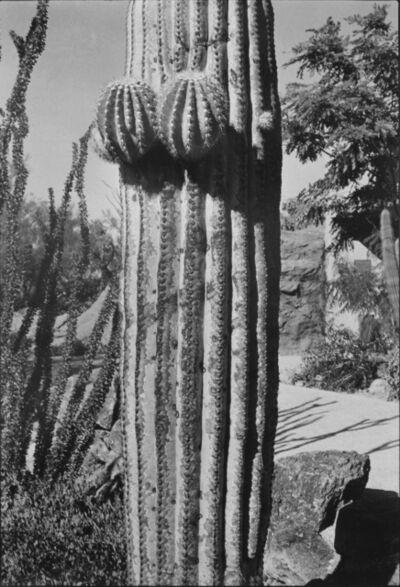 Elliott Erwitt, 'Arizona', 1978