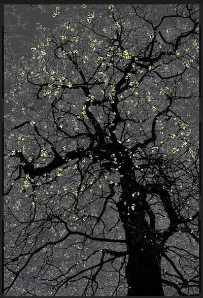 Arman, 'N°21, Dark Trees series (Ed. 2/4 + 1 AP)', 2016