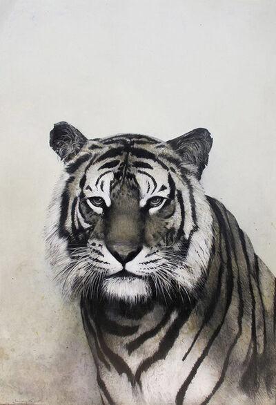 David Morago, 'TIGRE', 2015