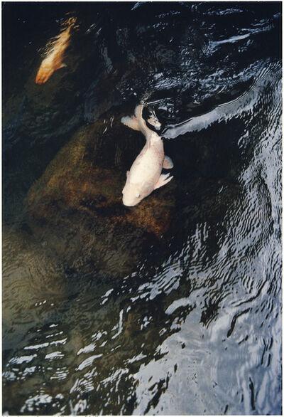 Jitka Hanzlová, 'Fish Friends Flowers #8 / Cotton Rose # 1', 2004