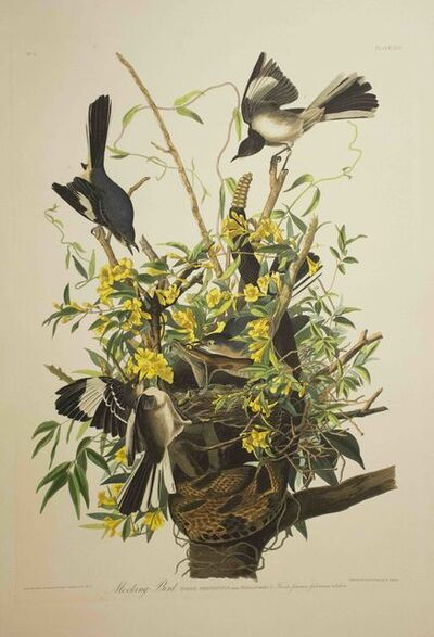 John James Audubon, 'Mocking Bird, Edition Pl. 21', ca. 1999