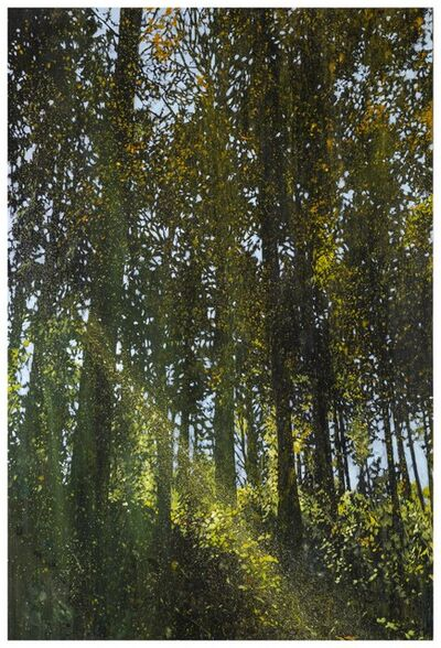 Una URSPRUNG, 'Lights in the Forest-1', 2016