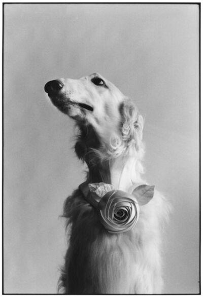 Elliott Erwitt, '15. New York City. (Dog portrait)', 1999