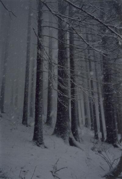 Jitka Hanzlová, 'Forest #2, Untitled (Snow Storm)', 2000