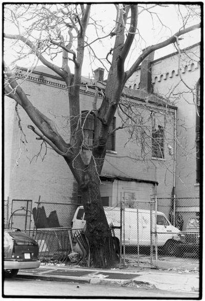 Zoe Leonard, 'Tree + Fence, S. 3rd St.', 1998
