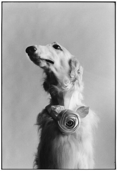 Elliott Erwitt, 'New York City (Dog Portrait)', 1999