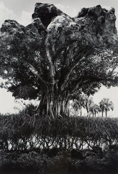 Jerry Uelsmann, 'Rock-Tree', 1969