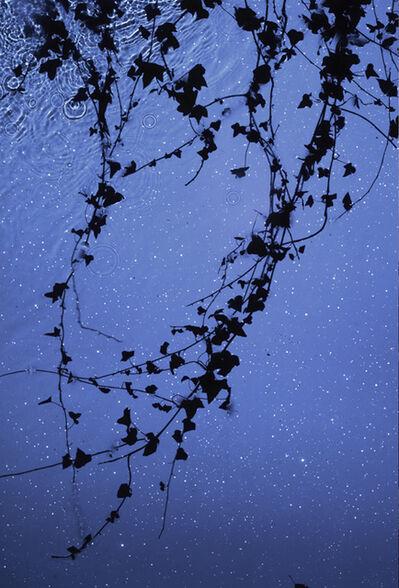 Susan Derges, 'Star Field Ivy', 2012