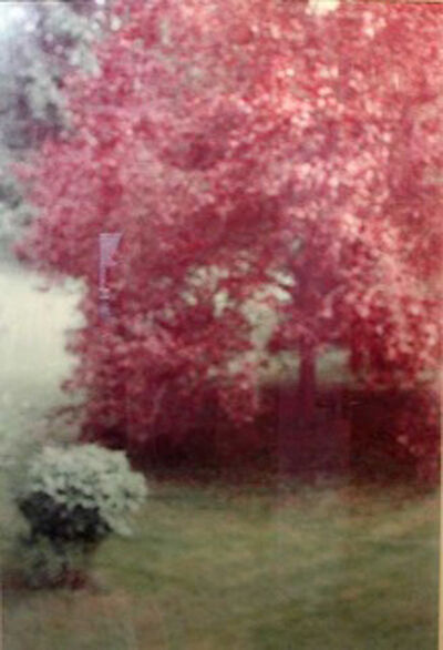 Seton Smith, 'Red Tree'