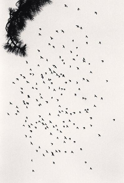Michael Kenna, 'One Hundred and Seventy Five Birds, San Francisco, USA', 1992