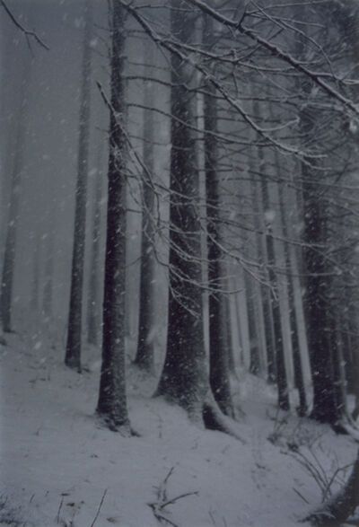 Jitka Hanzlová, 'Untitled (Forest 02, Snow Storm)', 2000