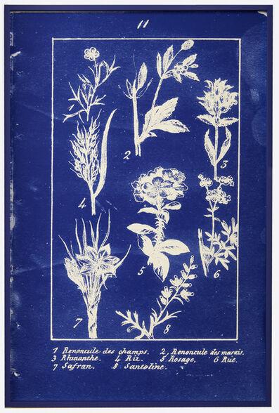 Penelope Stewart, 'plate 11 Nouvelle Botanique (phthalo blue)', 2018