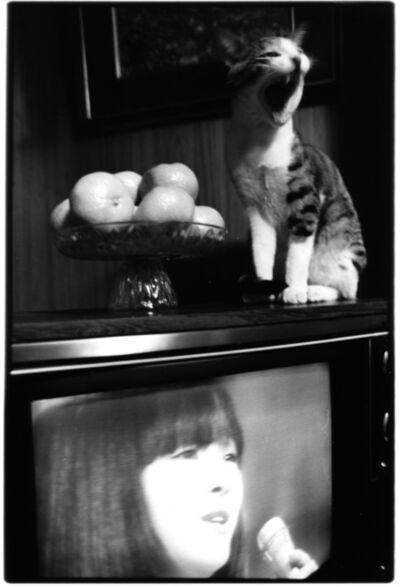 Masahisa Fukase, 'Sasuke!! Dear my cat', 1978